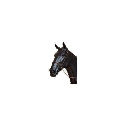 Cabezada presentacion caballo arabe